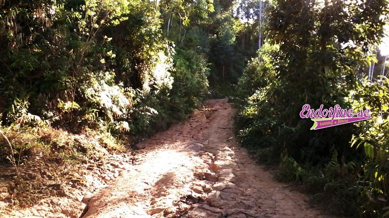 trilhas no morro do barão